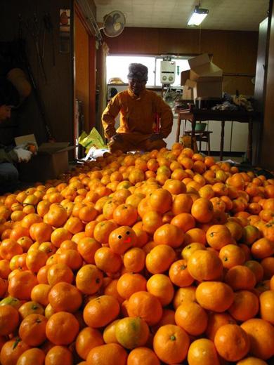 オレンジver..jpg